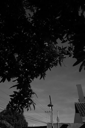 Low angle view of trees and building against sky