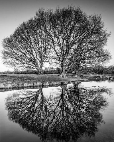 Winter morning on the River Stour, trees reflected in the water Trees Tree Water Reflection Bare Tree Tranquility Tranquil Scene Nature Sky Landscape River Riverside River View Riverscape Black And White Black And White Collection  Tree Reflection In Water Winter Dawn Early Morning Winter Morning