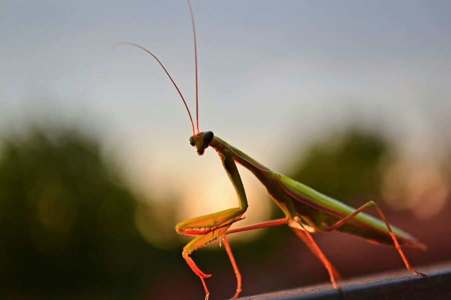 Nature Glitch Forest Macro Insects  Bug Colors Macro_collection Mantis Praying Mantis