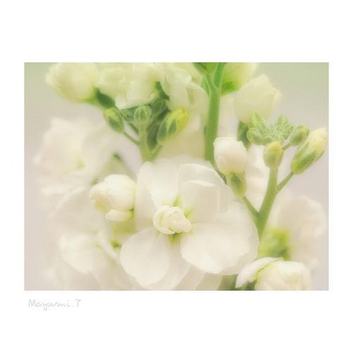 春の訪れ🌸ストック Flower Nature White Flower 日本 東京 Memories Beauty In Nature Olympus OM-D E-M5 Olympus Photography Playground Japan Photography Olympus倶楽部 White Color Japan City Life Day