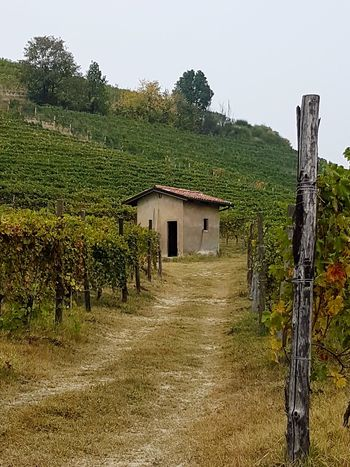 Nature Outdoors Day No People Beauty In Nature Old Style Piedmont Italy Langhe Autumn The Past Travel Destinations Small House Rural Building Vineyard Vineyards In Autumn Vineyard Cultivation Barolo Vineyards