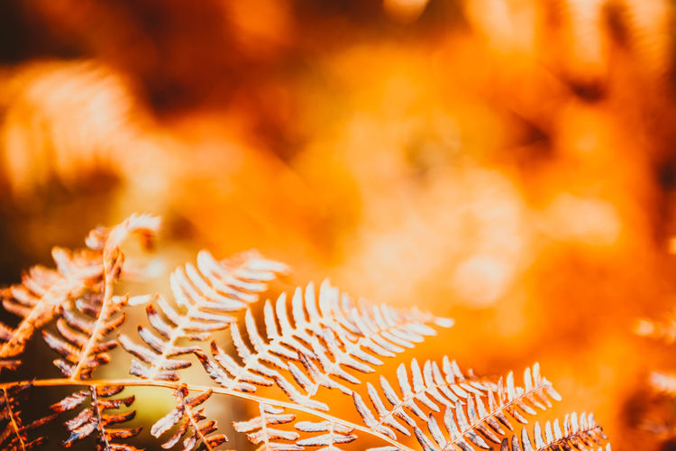 Abstract Autumn Background Beautiful Beauty Botany Bracken Branch Bush Closeup Color Dark Dry Environment Fall Fern Flora Foliage Forest Fresh Frond Garden Grass Green Growth Jungle Leaf Leaves Life Light Lush Macro Natural Nature Orange Ornamental Pattern Plant Red Spring Stem Stock Summer Sunny Texture Tree Wood Wooden Yellow