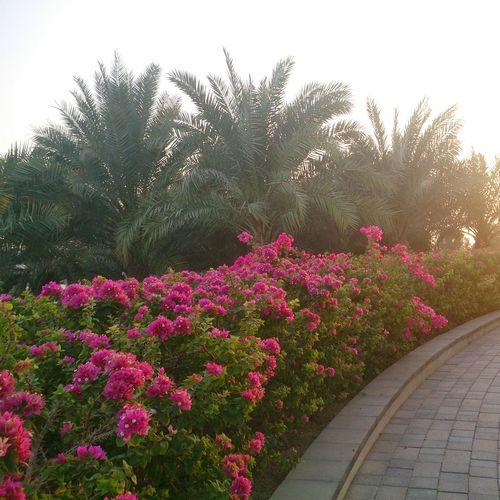 Hz339 HBMSU A View From Dubai Smart