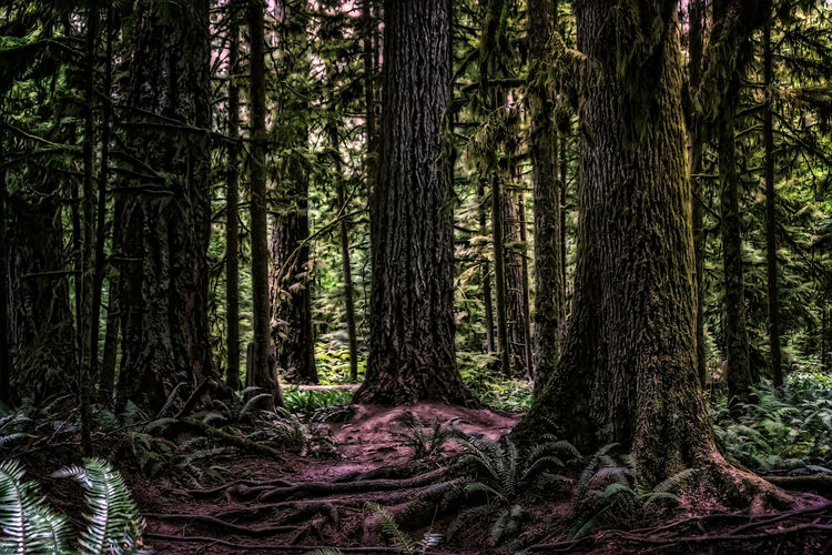 large trees in