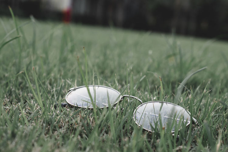 Close-up of shells on field