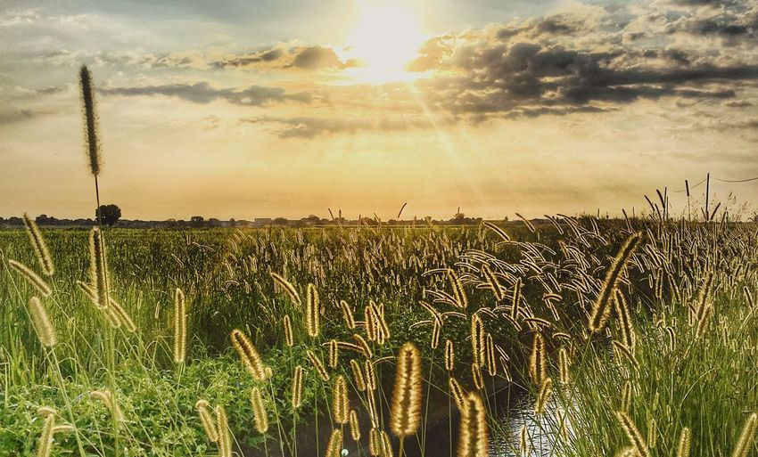 Sky Sunset Plant Beauty In Nature Sunlight Cloud - Sky Tranquility Field Growth Nature Tranquil Scene Scenics - Nature Sun No People Land Agriculture