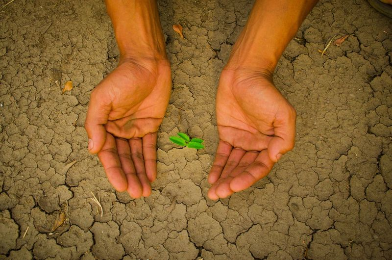 plant glowing on dry sand, Hope concept Drought Desert Hope Plant Adult Adults Only Close-up Concept Cracked Day Dirt Dry Glowing Hand Heart Heart Shape Human Body Part Human Hand Nature One Man Only One Person Only Men Outdoors People