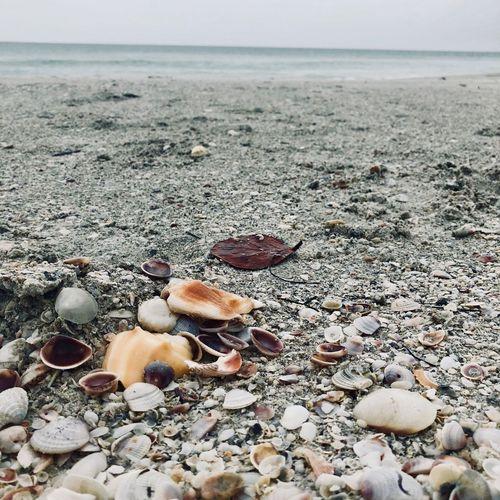 Sea Land Beach