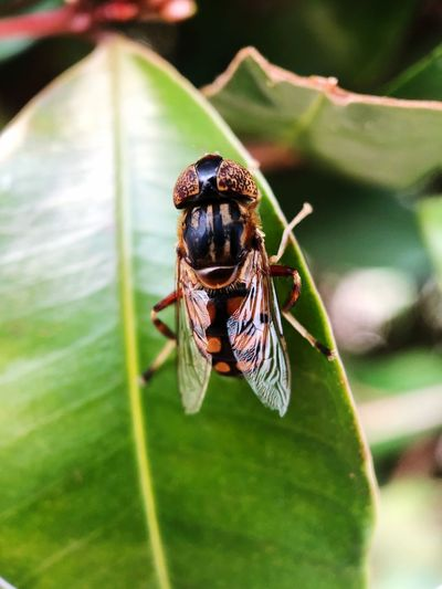 Attention to detail. Look harder. Macro Insects Moment Macro Shot On Moment Insect Invertebrate Animal Wildlife Animals In The Wild Animal Themes Animal One Animal Close-up Plant Part Leaf Focus On Foreground Green Color Animal Wing Nature Fly No People Housefly Day Outdoors Plant