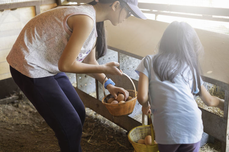 Mother And Daughter Collecting Eggs In Dairy Farm