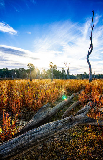 Reedy Swamp, Shepparton Beautiful Day Canon 7D HDR Beauty In Nature Canon Cloud - Sky Environment Grass Land Landscape Nature Outdoors Photowalk Scenics - Nature Shepparton Sky Sunlight Tranquility Wetlands The Great Outdoors - 2018 EyeEm Awards