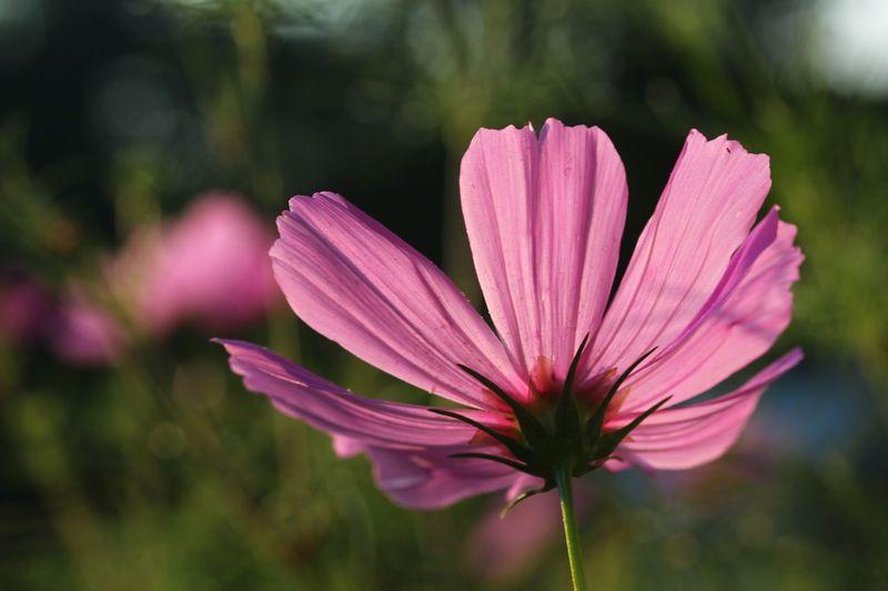Flower Flower Photography