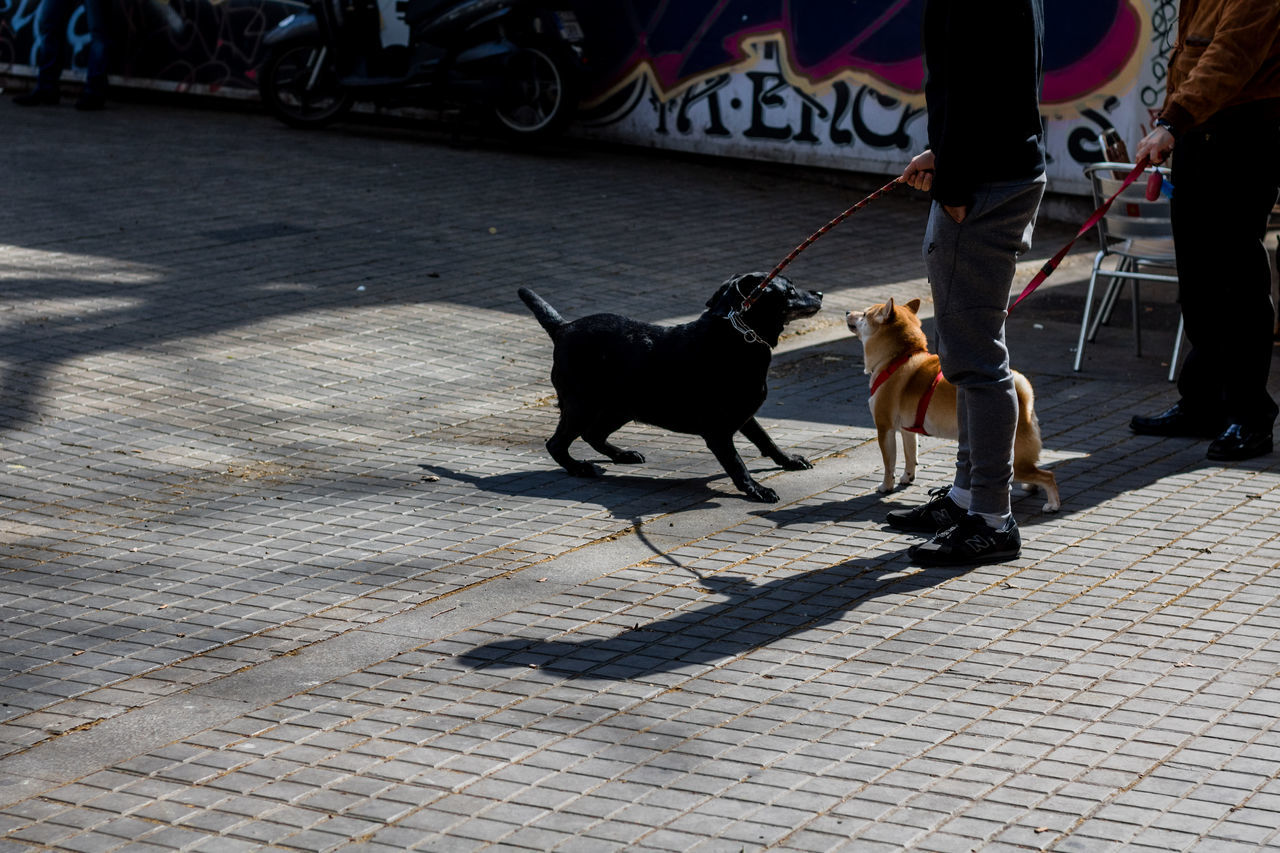 domestic animals, dog, pets, animal themes, mammal, street, pet leash, one animal, shadow, outdoors, low section, sunlight, day, real people