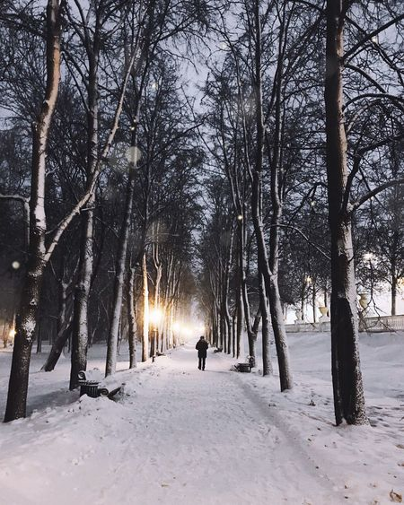 winter magic ✨❄️ Snow Cold Temperature Winter Tree Plant One Person Nature Deep Snow Real People Men Walking