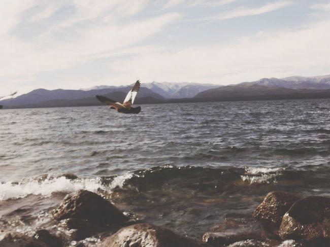 Ave Volar Libertad Naturaleza ❤🌸🌹