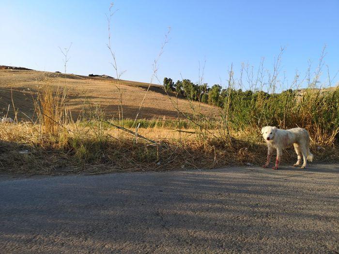 Pets Dog Road