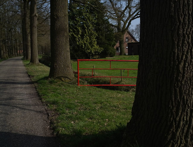 Beauty In Nature Day Farmer Land Nature No People Tree Red Gate Twente The Netherlands