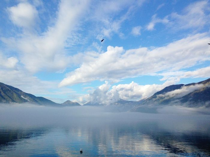 Boka Kotor Bay Boka Kotorska Foggy Weather View Weather Animal Themes Animals In The Wild Beauty In Nature Bird Cloud - Sky Day Foggy Foggy Morning Kotor Montenegro Mountain Nature One Animal Outdoors Scenics Sky Tranquil Scene Tranquility Water Waterfront