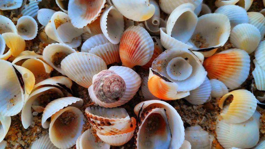 Sea Sea Life