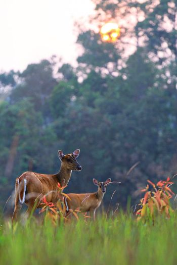 Deer Deers Forest Nature Nature_collection Nature Photography Naturelovers Naturephotography Kaoyai Thailand