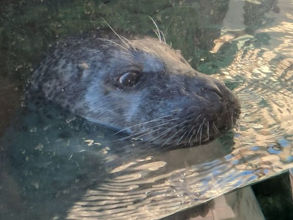That face! Water Sea Underwater Nature Swimming Sea Life Mammal Animal Themes Seal - Animal What Who Where Lookatthatface Whoareyou?