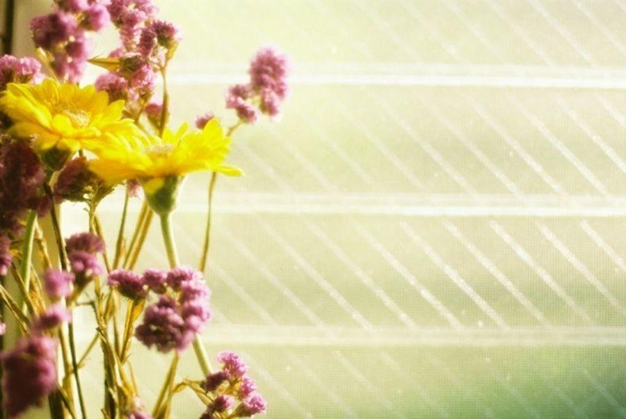 35mm Film Film EyeEm Best Shots Flowers Window Colorful