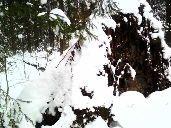 Close-up of snow on tree branch during winter