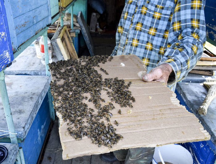 A large congestion of bees on a sheet of cardboard. Swarming of the bees. Honey bee Animal Apiary Bee Beehive Beeswax Busy Cell Honey Honeycomb Insect Pollinator Propolis Swarm Wax