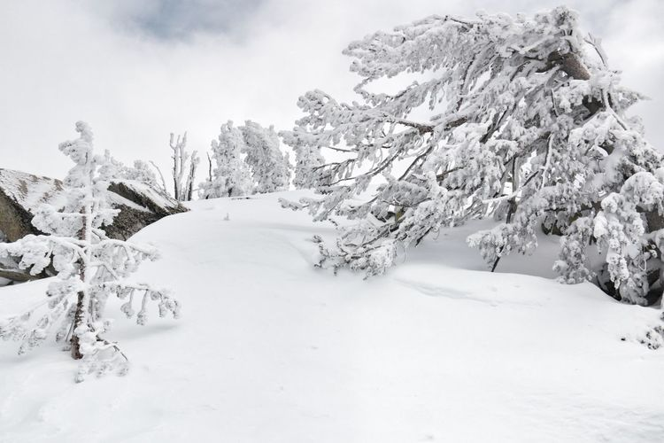 Winter Wonderland ❄ White Color Tree South Lake Tahoe Outdoors Snow Cold Temperature Beauty In Nature Heavenly Ski Resort Mountain Tranquil Scene Sierra Nevada Mountains
