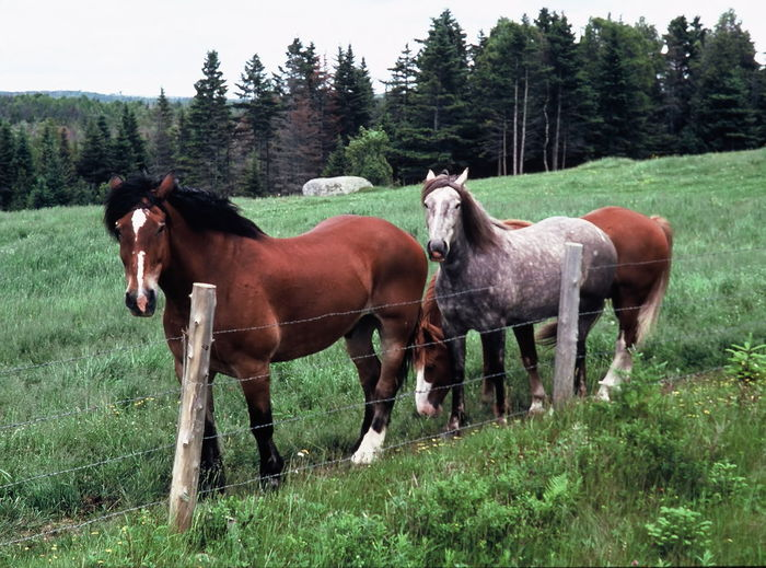 Horses in the pasture Animal Themes Brown Clear Sky Day Domestic Animals Field Full Length Grass Grassy Green Color Herbivorous Horse Livestock Mammal Nature Non-urban Scene Side View Standing Tranquil Scene Tranquility Tree Two Animals