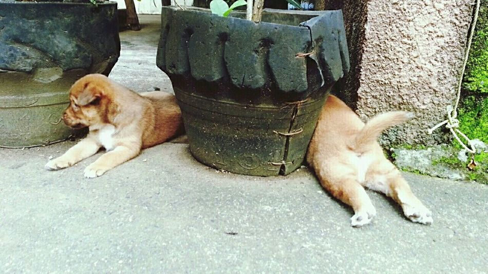 a long dog siblings. Pet Photography  Puppies Cute Animals Puppies😍 Cute Pets