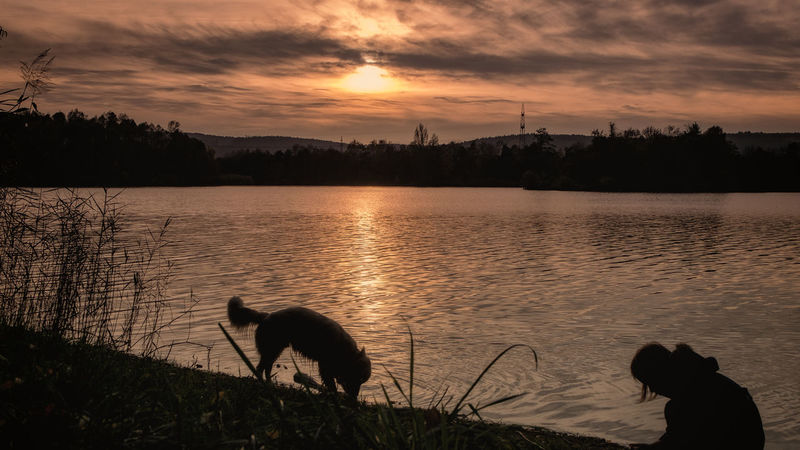 silhouette dog on lake against sky during sunset Autumn Autumn colors EyeEm Best Shots EyeEm Nature Lover Animal Animal Themes Beauty In Nature Canine Cloud - Sky Dog Domestic Domestic Animals Fujifilm_xseries Lake Mammal Nature One Animal Outdoors Pets Plant Silhouette Sky Sunset Vertebrate Water