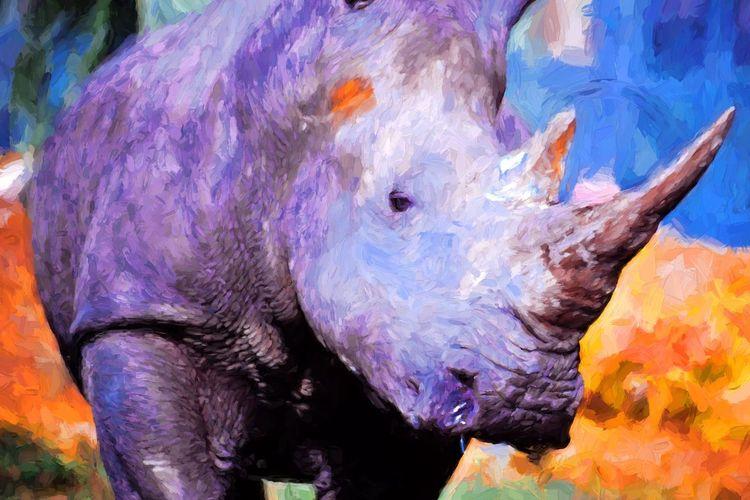 DbJR Rhino Rhinoceros Africa Safari Safari Adventure The Great Outdoors - 2017 EyeEm Awards