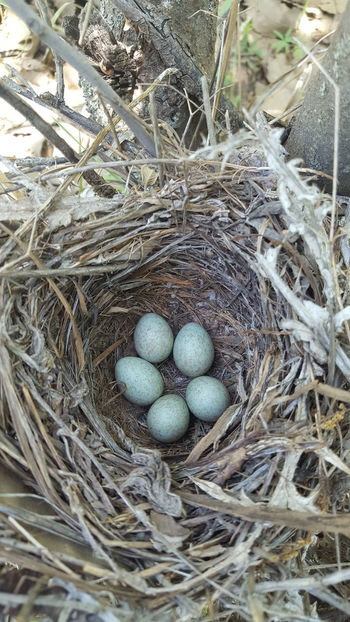 Animal Nest Bird Nest High Angle View Beginnings Egg No People Fragility Day New Life Outdoors Hay Close-up Animal Themes Nature