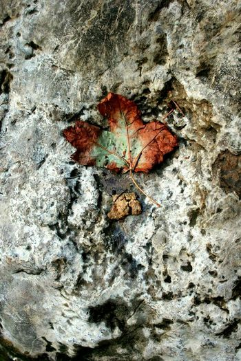 Fall Beauty Nature Leaf Fall Leaf Umpqua River Hotspring Perfect Hiking Adventures