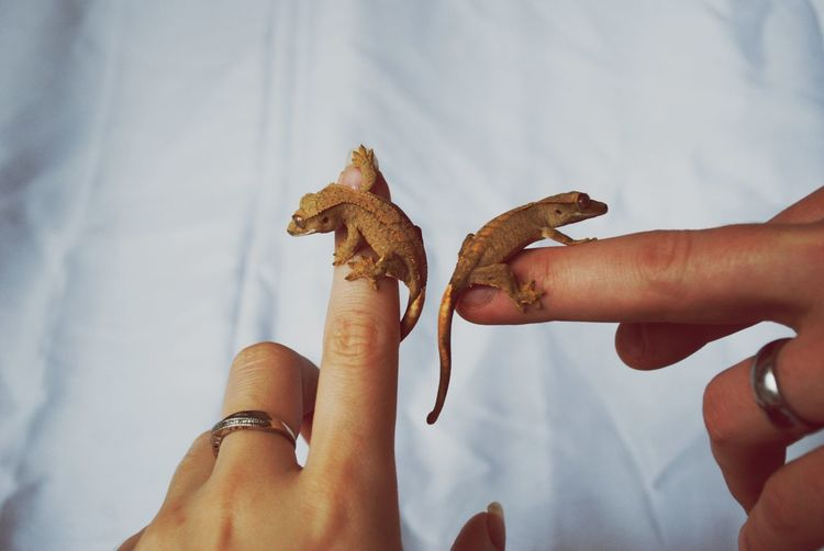 Cropped fingers of woman with lizards