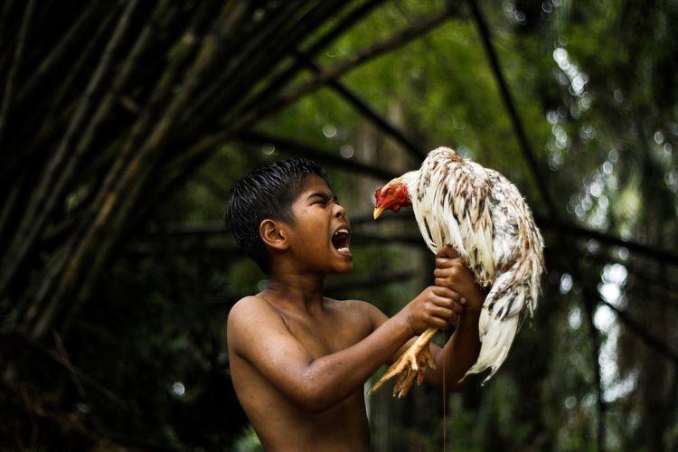 Shirtless boy holding chicken bird