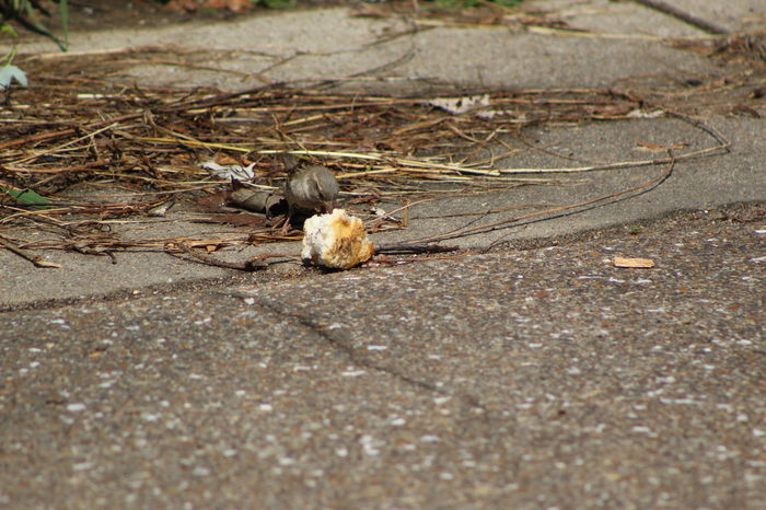 Animal Themes Bird Eating Bird Eating Bread Close-up Day Ground Mammal Nature No People Outdoors Selective Focus Surface Level Tranquility