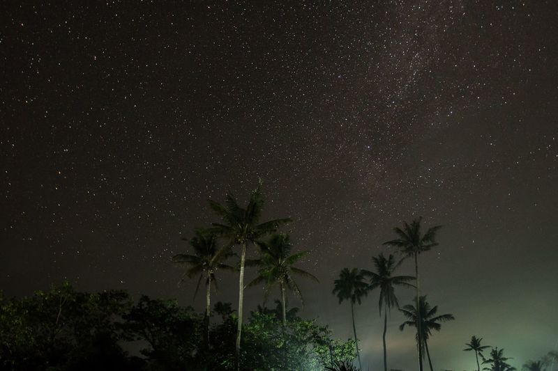 Low angle view of palm trees against star field at night