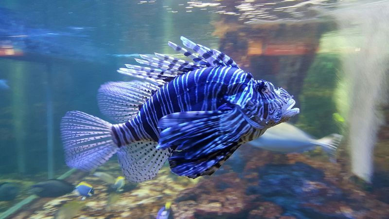 Strange, but beautiful 😆 Galati City Romania Aquarium Aquarium Life Fish Exotic Fish Beautiful Malephotographerofthemonth EyeEm Best Shots EyeEmBestPics