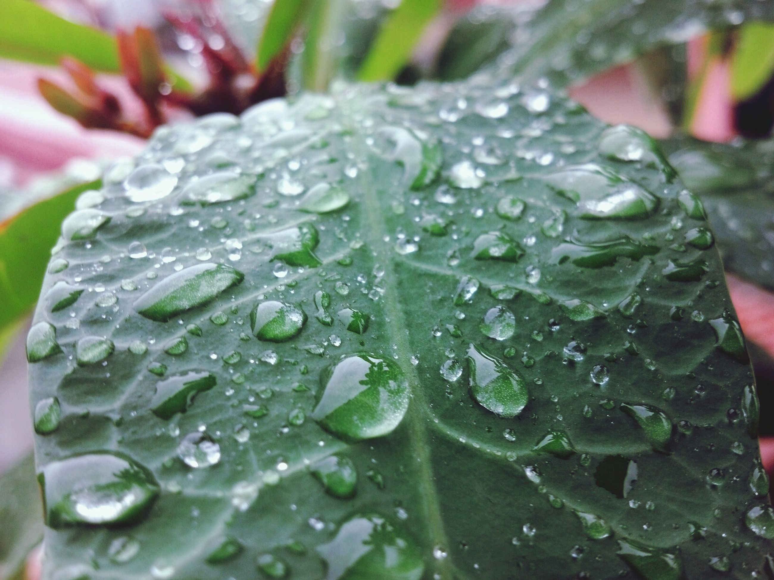 drop, water, leaf, wet, freshness, close-up, green color, growth, fragility, dew, plant, nature, beauty in nature, focus on foreground, raindrop, rain, droplet, purity, selective focus, season