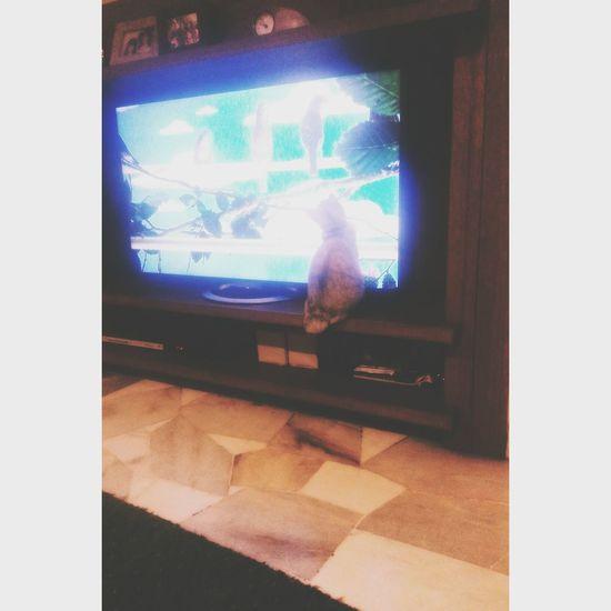 Cat Magic Lightbox Tv