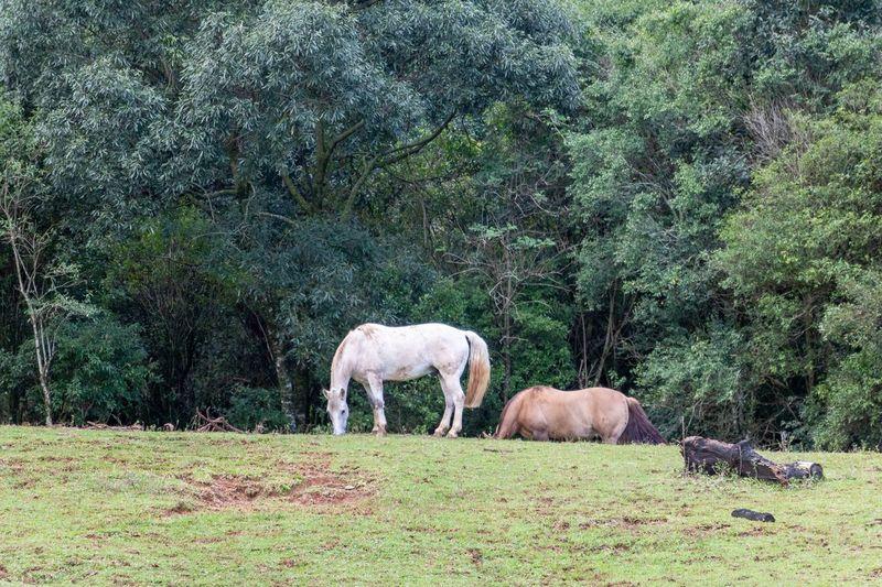 Horses Plant