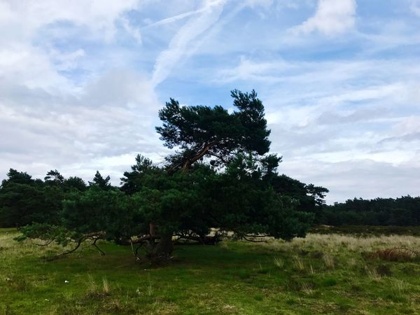 Tree Sky Field Grass Cloud - Sky Nature Landscape Growth No People Day Outdoors Beauty In Nature Iphone
