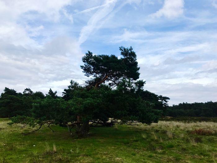 Tree Sky Field