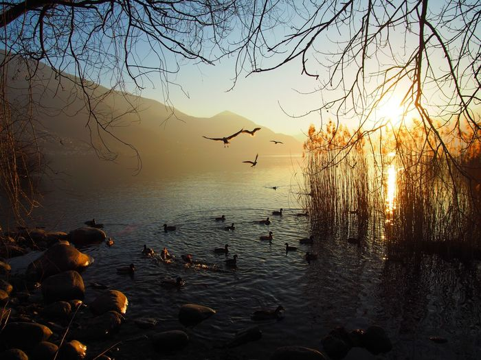 Animal Themes Animal Wildlife Animals In The Wild Beauty In Nature Bird Day Flock Of Birds Large Group Of Animals Nature No People Outdoors Scenics Sky Sunset Tranquility Tree Water