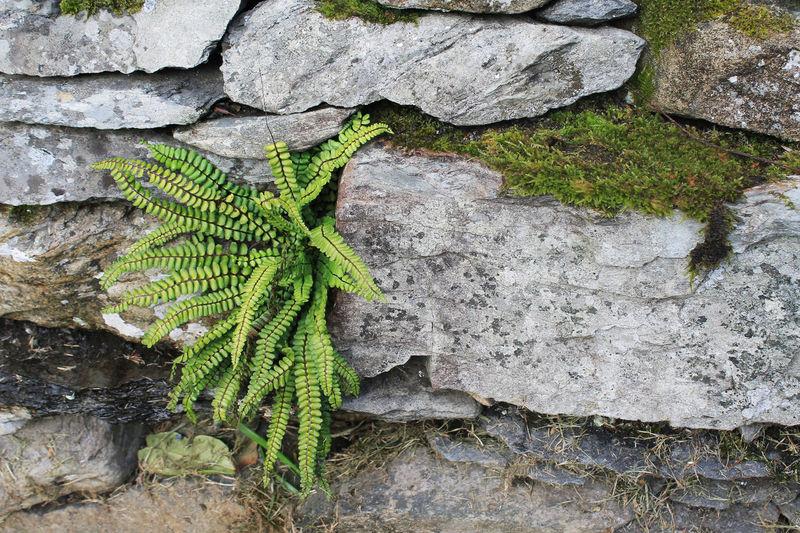 Moss England