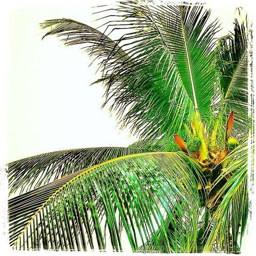 Brazil Fortaleza Dreambeach Dreamypalmtree Godthing