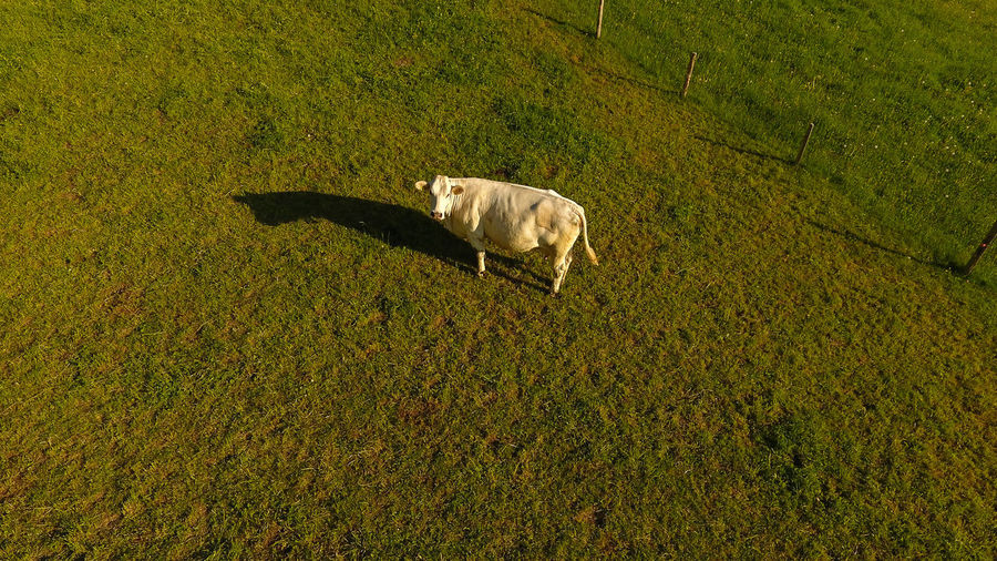 Drone  Animal