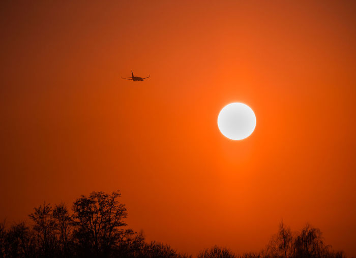 I hoped that this plane wouldn't crash straight into the sun. It didn't. Sky Flying Sunset Orange Color Air Vehicle Transportation Mode Of Transportation Beauty In Nature Airplane Tree Low Angle View Nature Silhouette No People Sun Scenics - Nature Mid-air Plant Outdoors Travel Travel Towards The Sun Plane
